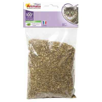 Herbe à Chat Catnip 100% Naturelle pour Chat - Animalis - 30g