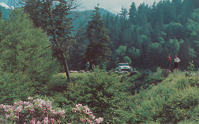 Vintage Tennessee Postcard - Newfound Gap, Great Smoky Mountains