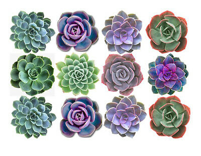 12 Succulent Edible Wafer Cupcake Cup Cake Decoration Succulents Images Toppers