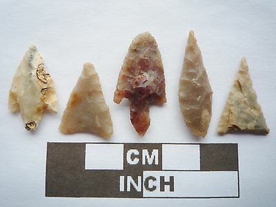 Neolithic Arrowheads x5, High Quality Selection of Styles - 4000BC - (Q113)