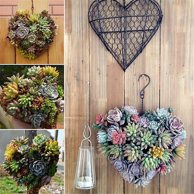 Metal Hanging Plant Basket Heart Shape Succulent Flower Pot Window Door Decor