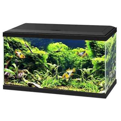 Aquarium 60 LED - Noir - Ciano