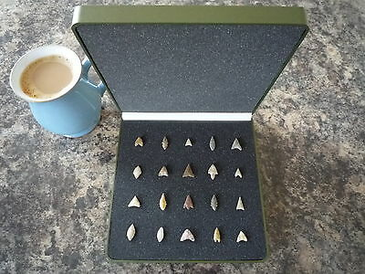 Miniature Neolithic Arrowheads x 20 in Display Case - 4000BC - (Q127)