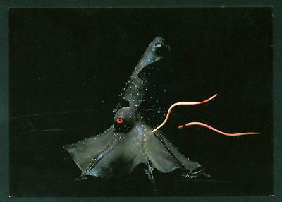 Vampire Squid Bioluminescence Living Light Attract Deep Ocean Creature Postcard