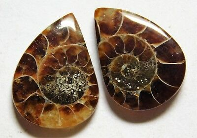 14.05 Cts Natural Ammonite (19mm X 14mm each) Loose Cabochon Match Pair A22