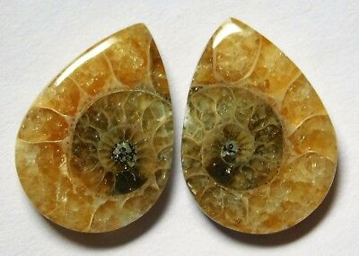 17.65 Cts Natural Ammonite (20mm X 14.4mm each) Loose Cabochon Match Pair