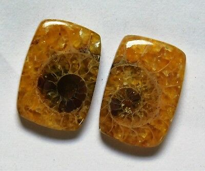 13.50 Cts Natural Ammonite (16.3mm X 11.3mm each) Loose Cabochon Match Pair