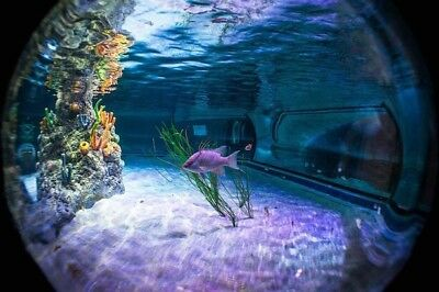 2 Tickets to SEA LIFE CENTRE Manchester on Thursday 7th February 2019