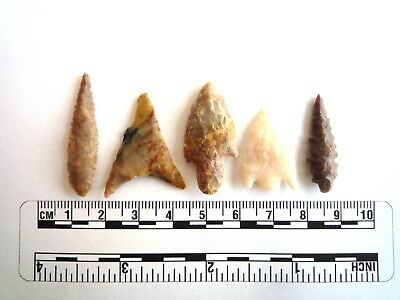 Neolithic Arrowheads x 5, High Quality Selection of Styles - 4000BC - (2449)