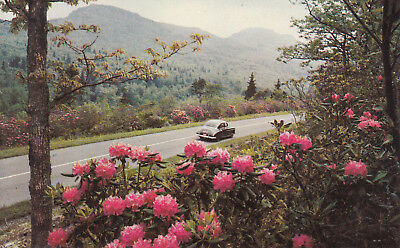 Washington Vintage Postcard - Scenic  Drive Along Hood Canal, Olympic Peninsula
