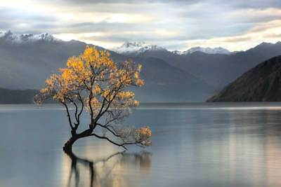 LONE TREE IN CALM WATER ARCHIVAL COTTON RAG ART PRINT mountains lake lost tree