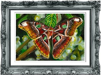 original drawing art illustration butterfly 25SV gouache A3