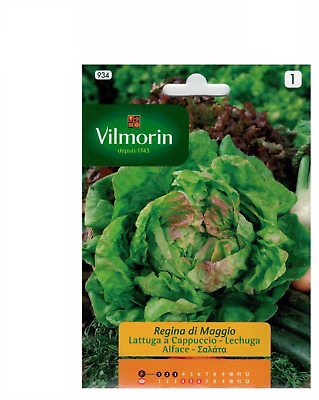 On of seeds LETTUCE QUEEN de MAYO - 7 grs. Easy cultivation