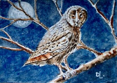 Night Owl - Original ACEO watercolour by David Laurence.