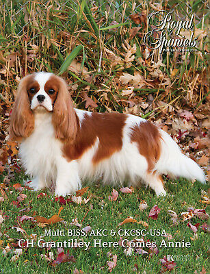 NEW Royal Spaniels Magazine Book - Collectible - Cavalier King Charles -Winter10