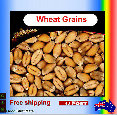Au seller ORGANIC Wheat Grain PURE NATURAL Superfood Spel Premium Gurmet Quality
