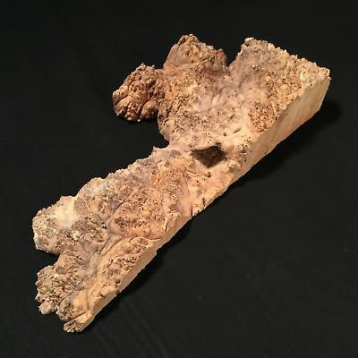 WOOD Blank, ART Maple Burl, for woodworking, crafting.