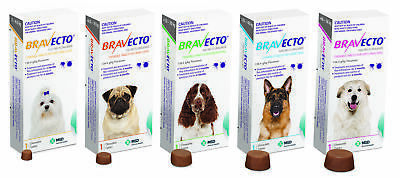 Bravecto for Dogs flea & tick control yellow orange green purple 1 Chew all size