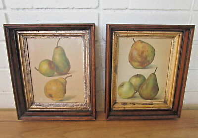VINTAGE PEAR PRINTS IN EARLY 1900's SHADOW BOX FRAMES ~ ORIG. WOOD BACKINGS aafa