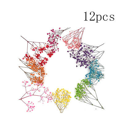 12pcs DIY Assorted Pressed Flower Dry Bouquets for Art Craft Card Scrapbooking