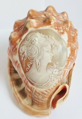 ANTIQUE CARVED CAMEO CONCHE SHELL c1890's - ITALIAN ? - FINE QUALITY CARVING