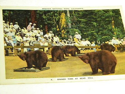1938 Print Post Card of Bears in Sequoia National Park, California