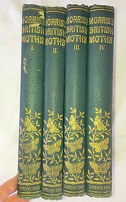 Natural History of BRITISH MOTHS in 4 Volumes,1891.Morris. Hand Colored Plates