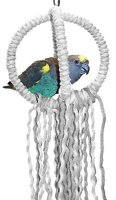 Small  Parrot Orbit Swing Toys Perches