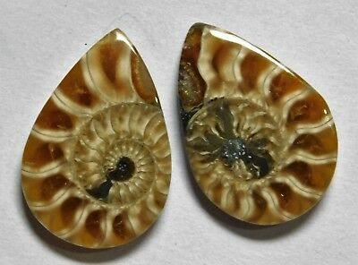 14.95 Cts Natural Ammonite (21mm X 14mm each) Loose Cabochon Match Pair