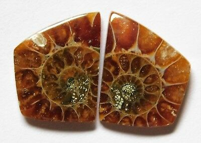 13.10 Cts Natural Ammonite (16.6mm X 12.6mm each) Loose Cabochon Match Pair