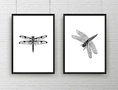 Set of 2 - Dragonfly Detailed Drawing Insect Decor Wall Art Poster Print Framed