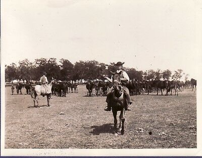 Hungarian Plain Putza Cowboy Hongrois Horses Hungary chevaux old Photo 1920's