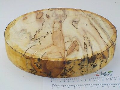 Huge Lightly Spalted English Horse Chestnut woodturning bowl blanks 100mm thick