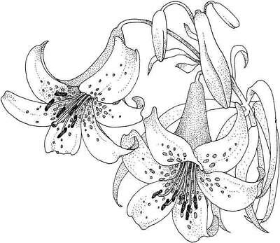 Flower - Flowers #9 Unmounted Clear Stamp Approx 60x52mm