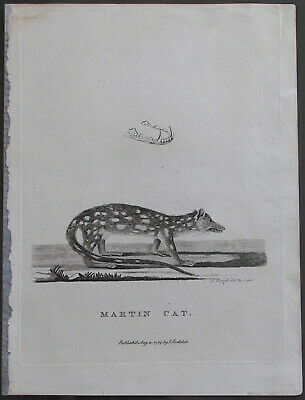 1789 Original Engraving Martin Cat Voyage Of Governor Phillip To Botany Bay