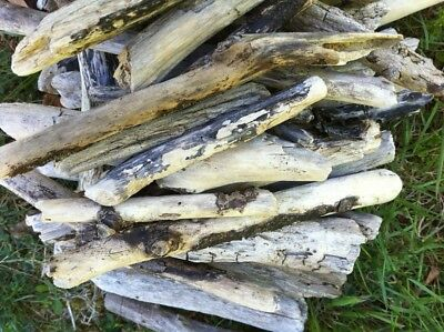 Beach Driftwood Pieces Various Sizes for Craft