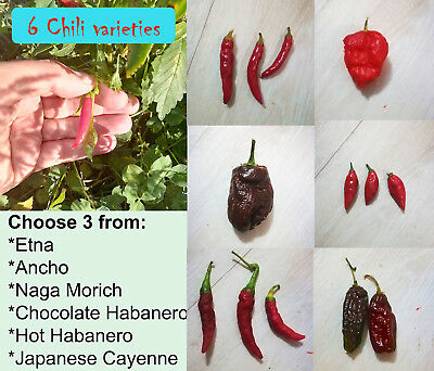 Semi di peperoncino, chili pepper seeds, choose 3 from 6 varieties