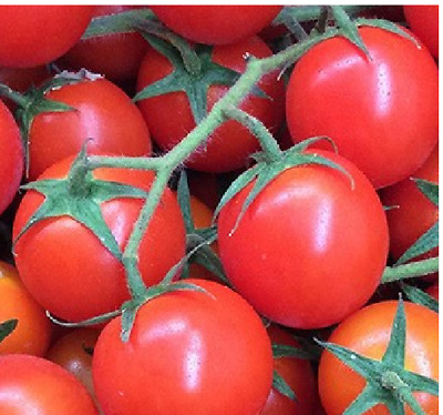 tomate ROUGE CERISE pour CHOP tomate 200 Graines Seeds