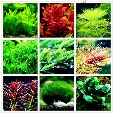 100pcs/bag aquarium plant seeds Water Grasses Random Aquatic Plant Grass Seeds