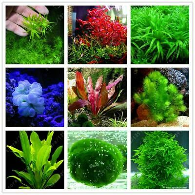100 pcs/bag aquarium plants seeds grass water Aquatic Plant seeds