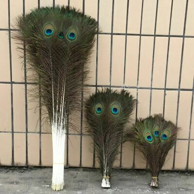 50 natural peacock feather 10-30inch 25-80cm beautiful