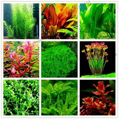100pcs/bag Aquarium Plants bonsai Grass Water Aquatic Plant garden Fish tank see