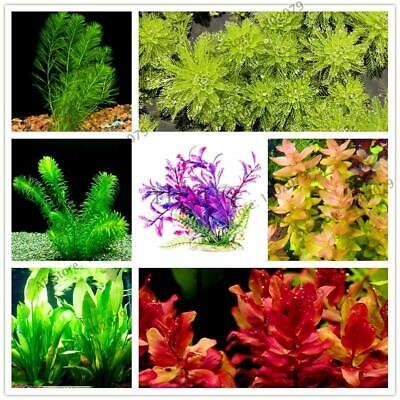 100pcs/bag mixed species water plants fish tank aquarium decoration grass seed