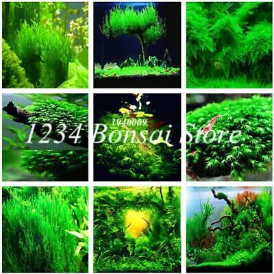 500 Pcs Aquarium Grass Plants Water Aquatic Plant bonsai Live Moss seed