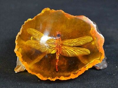 Fine China Decor Collectibles Amber Pancake Inlay Dragonfly Delicate Statue