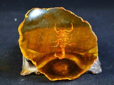 Fine China Decor Collectibles Amber Pancake Inlay Scorpion Delicate Statue