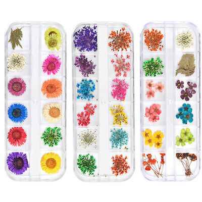 Real Dried Dry Flowers 3D Nail Art Decoration Design DIY Tips Manicure Colorful