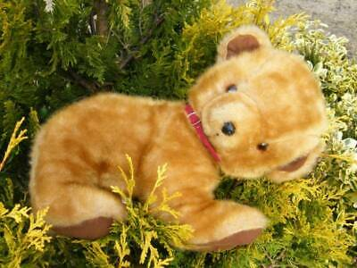 Adorable Rare Large Old Pedigree Bear Cub, Lovely Vintage Condition