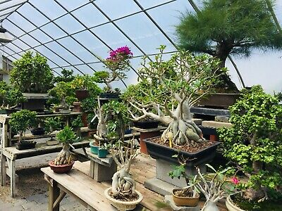 Bonsai West Gift Certificate 30%off  $100