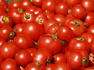 25 Seeds TOMATO RED JUICY Vegetable Garden Plant